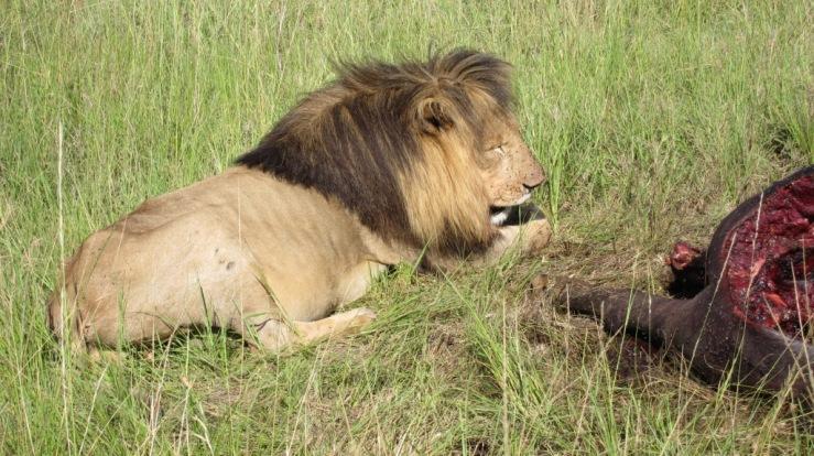 Masai Maran kansallispuistossa.
