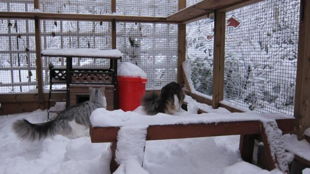 Cat yard got some snow