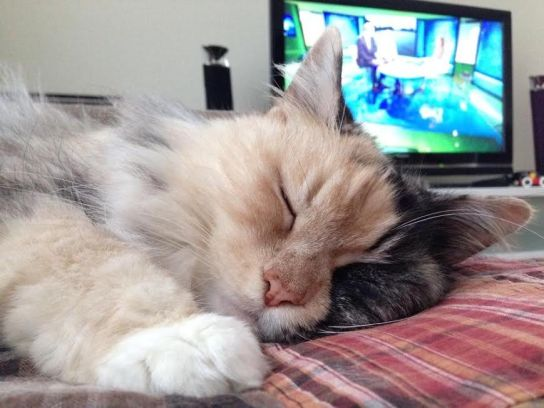 Rakastan lepäämistä, nukkumista, torkkumista ja loikoilua