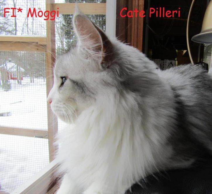 Moggi Cate Pilleri
