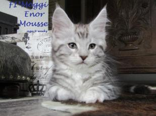 Moggi Enor Mousse